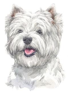 Akwarela malarstwo west highland white terrier