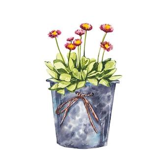 Akwarela małe różowe kwiaty w doniczce. ręcznie rysować ilustracje akwareli na białym tle. kolekcja wielkanocna.