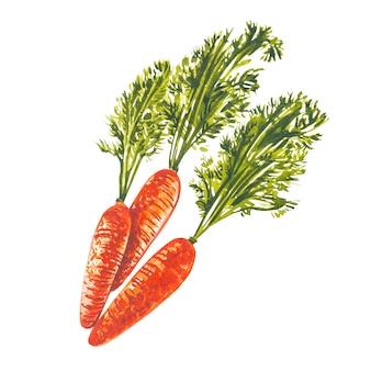 Akwarela marchewki. ręcznie rysować ilustracje akwareli na białym tle. kolekcja wielkanocna.