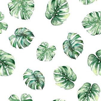 Akwarela monstera tropikalne liście seamles wzór na białym tle