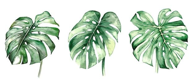 Akwarela monstera tropikalne liście zestaw ilustracji na białym tle