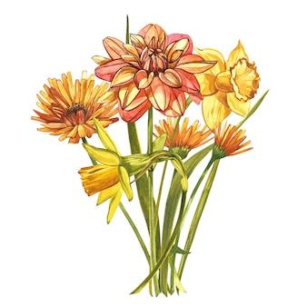Akwarela narcyz i dalie. dziki kwiat ustawia odosobnionego na bielu. botaniczna akwarela ilustracja, żółty bukiet narcyzów, rustykalne kwiaty. akwarela ilustracja na białym zestaw