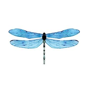 Akwarela niebieska ważka