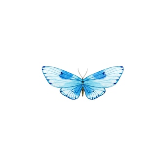 Akwarela niebieski motyl