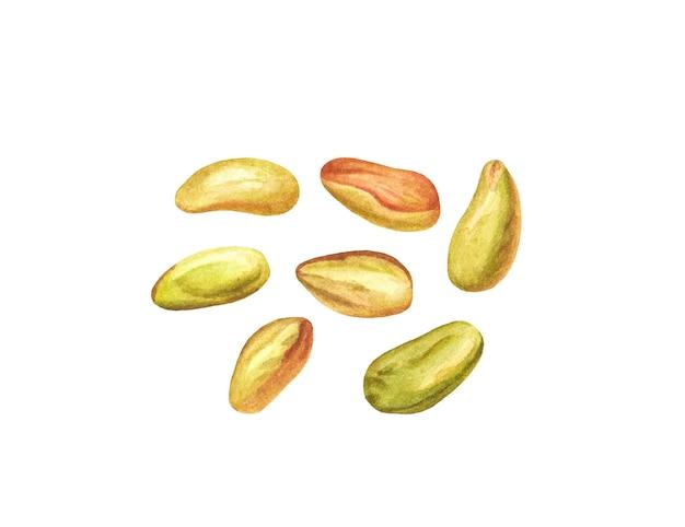 Akwarela obrane pistacje na białym tle.