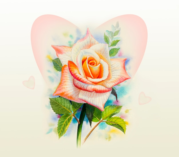 Akwarela oryginalny kwiat róży.