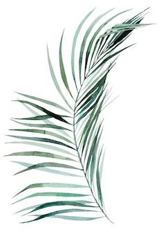 Akwarela palmy tropikalne liście zestaw ilustracji na białym tle