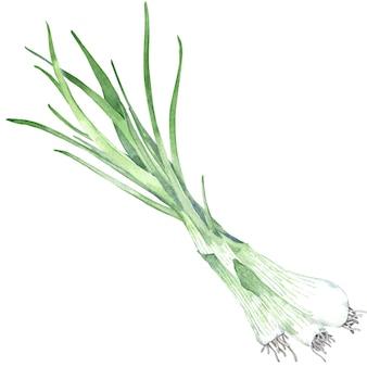 Akwarela pęczek zielonej cebuli