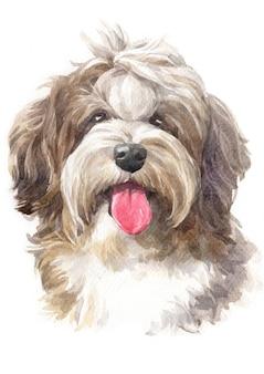 Akwarela, pies, kudłaty hawańczyk