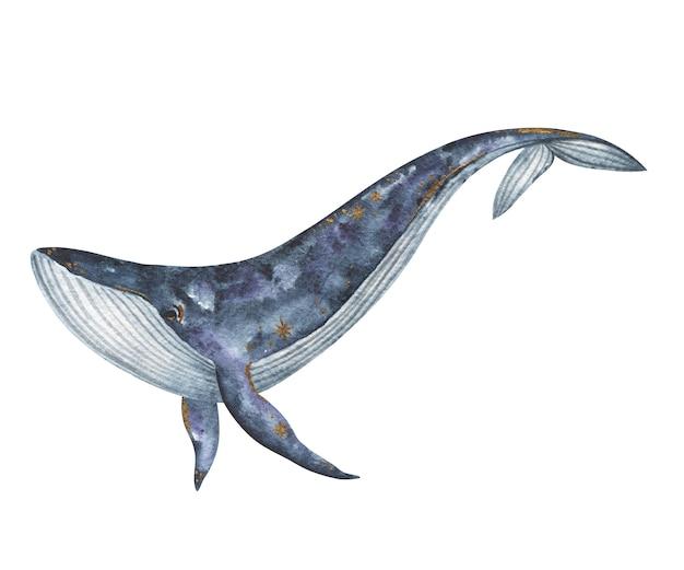 Akwarela płetwal błękitny ręcznie malowana ilustracja na białym tle, podwodne zwierzęta clipart