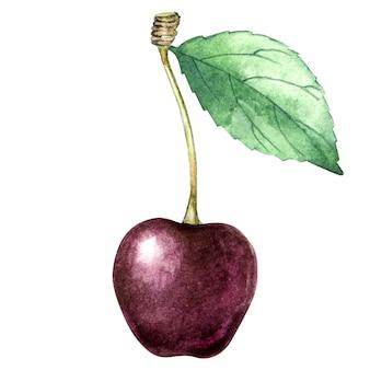 Akwarela pojedyncza wiśnia z liściem