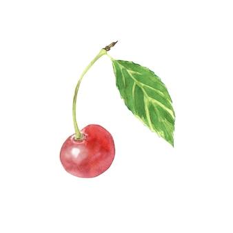 Akwarela pojedyncza wiśnia z zielonym liściem