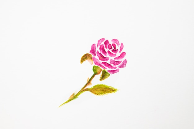 Akwarela projekt róży z bliska
