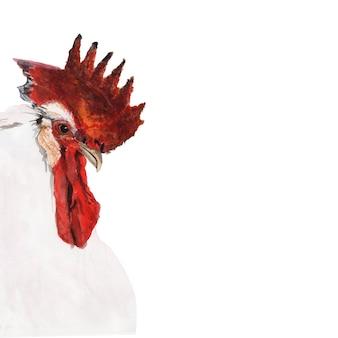 Akwarela przedstawiająca kurczaka