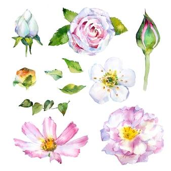 Akwarela ręcznie malowane kwiaty clipart zestaw na białym tle. ilustracje wiosny botanicznej.