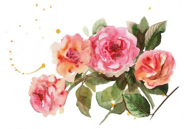 Akwarela ręcznie rysowane bukiet przetargu różowe róże.