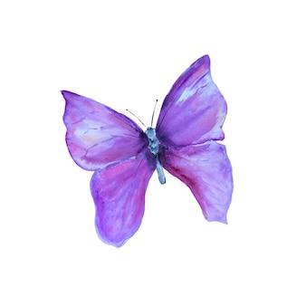 Akwarela ręcznie rysowane fioletowy motyl