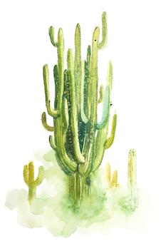 Akwarela ręcznie rysowane kolczasty kaktus na białym tle.