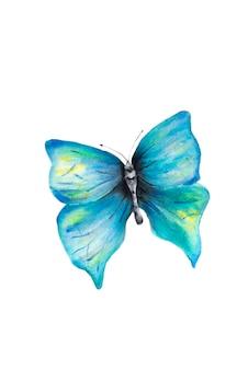 Akwarela ręcznie rysowane niebieski motyl