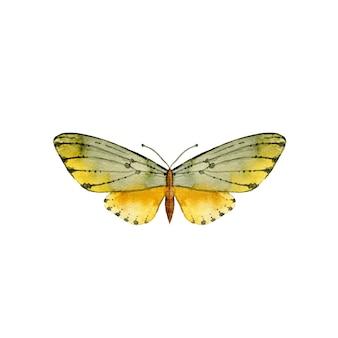 Akwarela ręcznie rysowane żółty motyl
