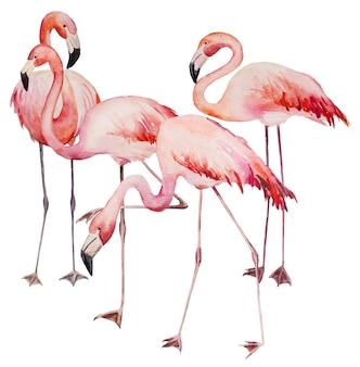 Akwarela różowe flamingi. egzotyczne ptaki na białym tle ilustracja do papeterii ślubnej, pozdrowienia, tapety, moda, plakaty