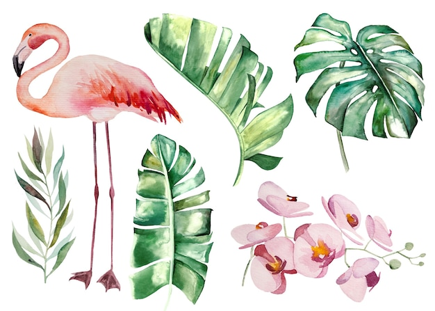 Akwarela różowe flamingi i tropikalne zielone liście na białym tle ilustracja do ślubu, pozdrowienia, tapety, moda, plakaty