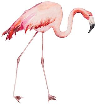 Akwarela różowy flaming. egzotyczny ptak na białym tle ilustracja do papeterii ślubnej, pozdrowienia, tapety, moda, plakaty
