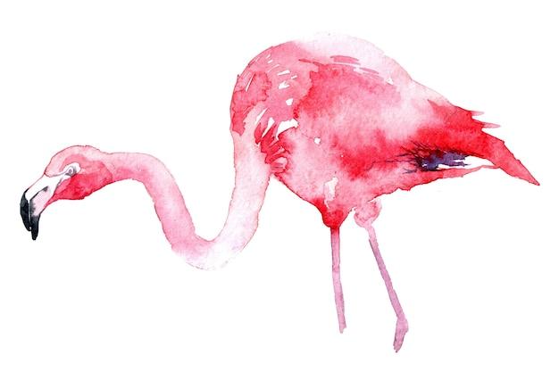 Akwarela różowy flaming.