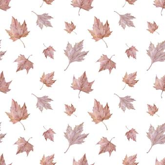 Akwarela rumieniec jesienne liście. różowy wzór liści klonu
