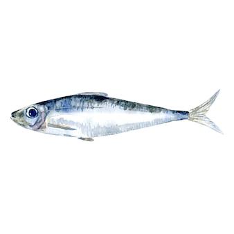 Akwarela sardynkowa ryba watercolor