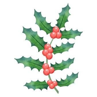Akwarela świąteczna roślina holly