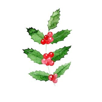 Akwarela świąteczna roślina holly.