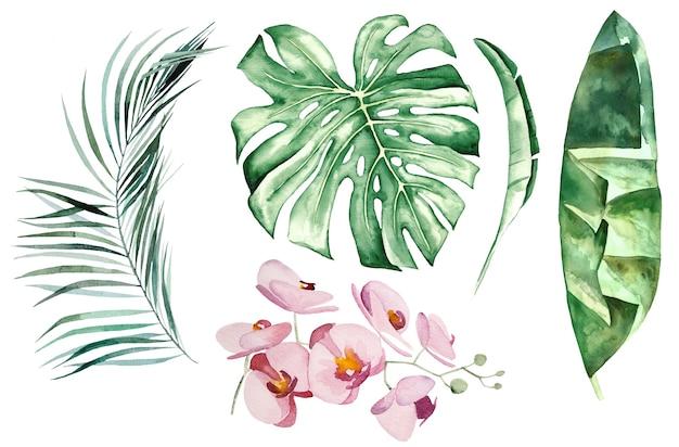 Akwarela tropikalne liście i kwiaty zestaw ilustracji na białym tle