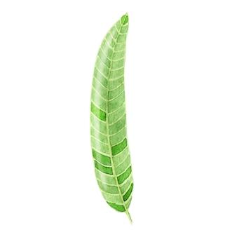 Akwarela tropikalny liść