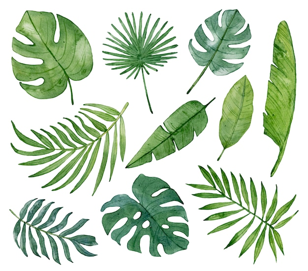 Akwarela tropikalny zielonych liści na białym tle.