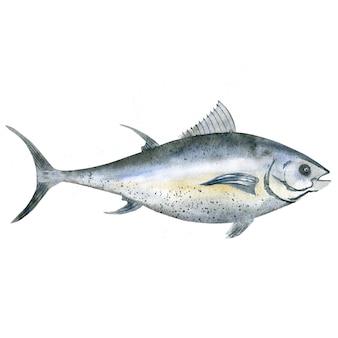 Akwarela tuńczyka
