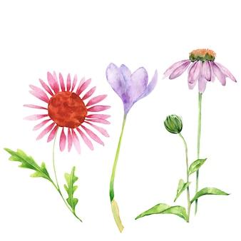 Akwarela wiosennych kwiatów