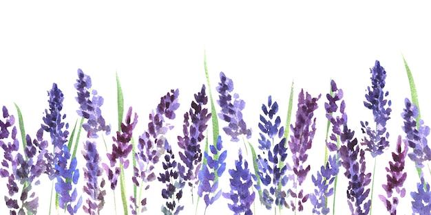 Akwarela z kwiatami lawendy na białym tle