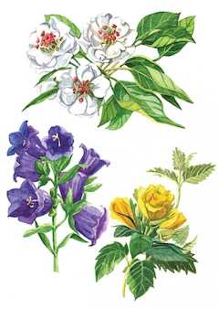 Akwarela zestaw kwiatów