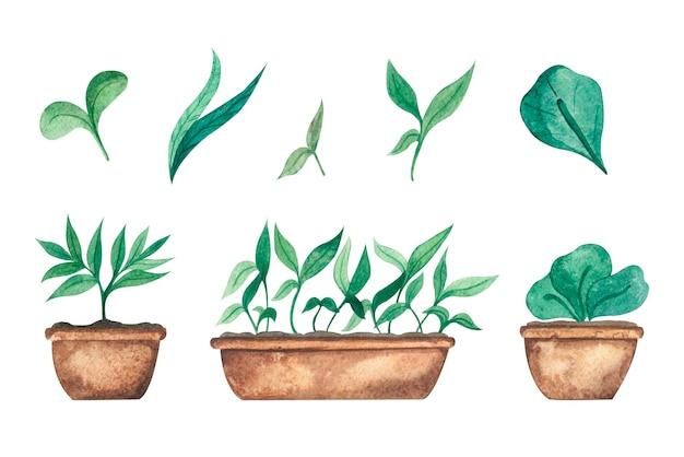 Akwarela zestaw z młodymi sadzonkami zieleni w doniczkach na białym tle elementów