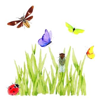 Akwarela zielona trawa z motylem
