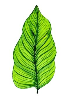 Akwarela zielony liść na białym tle