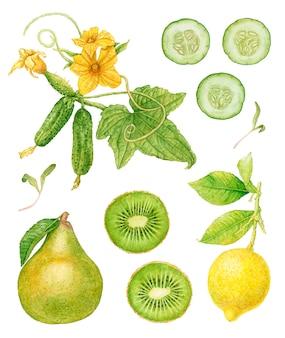 Akwarela zielony owoc, warzywa na białym tle.