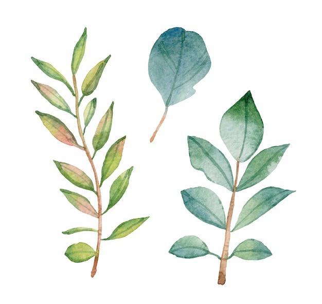 Akwarela zielonych liści na białym tle