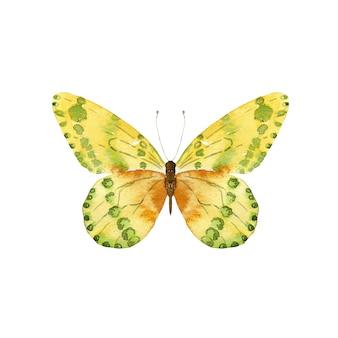 Akwarela żółty motyl