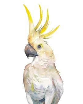 Akwarela zwrotnik ptak: żółty kakadu czubaty. pojedyncza papuga na białym tle