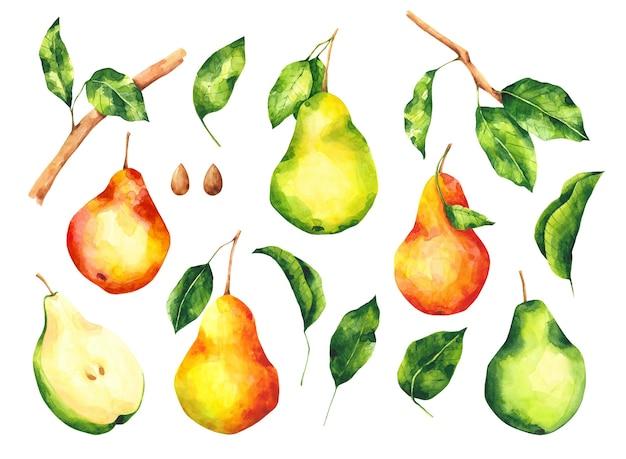 Akwarele gruszki i liście clipartów zestaw kolekcja owoców gruszki klip sztuki na białym tle