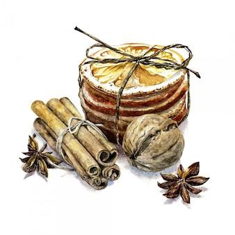 Akwareli ilustracja wysuszone pomarańcze, cynamon, orzech włoski akwareli skład