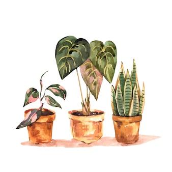 Akwareli rośliny domowe, miejska dżungla naturalna ilustracja