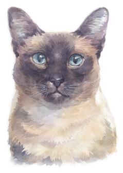 Akwarelowy obraz siamese shorthair cat
